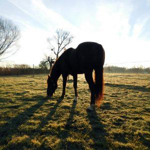 riedhof-ranch-pix1708-413